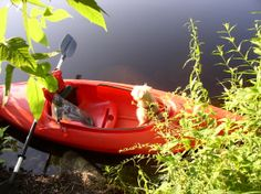 Jack waiting in the kayak