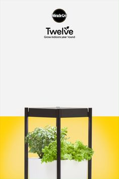 Peak gardening season is now 365 days each year with Miracle-Gro Twelve designed. Peak gardening season is now 365 days each year with Miracle-Gro Twelve designed to grow plants all year & indoors. Tap the Pin to discover this amazing hydroponic system.