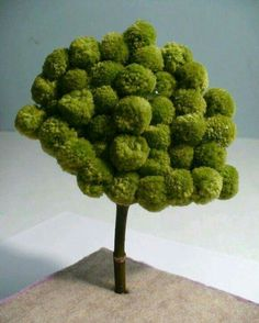 Ponpon ağaç