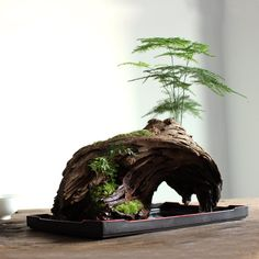 - ronbeckdesigns -ronbeckdesigns - ronbeckdesigns - Moss bonsai on dry wood - - Jardin Miniature Idee - Amazing diy moss projects for everyone from beginners to experts - Craft Directory 41 Mini Moss Garden Once More, This Time with Better Photos Indoor Bonsai, Bonsai Plants, Air Plants, Cactus Plants, Garden Terrarium, Bonsai Garden, Garden Plants, Succulent Planters, Succulent Terrarium