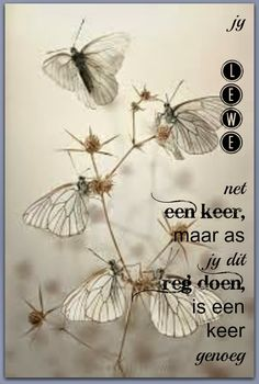 Afrikaanse Inspirerende Gedagtes & Wyshede: Jy lewe net een keer, maar as jy dit reg doen, is een keer genoeg Gossamer Wings, Afrikaanse Quotes, Goeie Nag, Goeie More, My Land, True Words, Animal Photography, Travel Photography, Color Splash