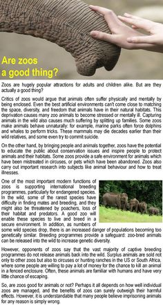 Are zoos a good thing? | LearnEnglish Teens | British Council