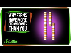 Why Ferns Have More Chromosomes Than You
