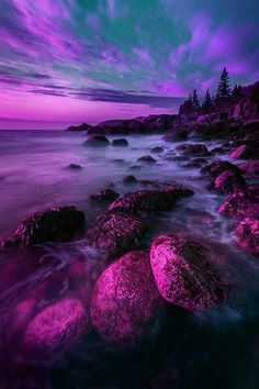 Purple passion : Photo