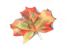 Autumn Leaf Painting - Maple leaf - L017-  print of watercolor painting via Etsy