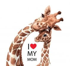 Watercolor mom giraffe and baby drawing, for Baby shower card layer path, clipping path isolated on white background. image illustration Source by kooboony background Giraffe Drawing, Giraffe Art, Baby Drawing, Baby Animal Drawings, Cute Baby Elephant, Cute Giraffe, Safari Animals, Cute Baby Animals, Wild Animals