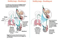 Healthy Lungs #COPD