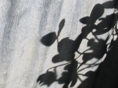 Flower Lace Shadow