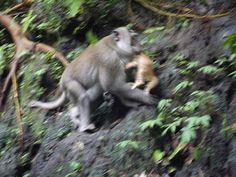 Monkey, Kitten, Bear, Explore, Animals, Travel, Kittens, Animais, Playsuit