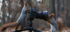 Fotógrafo russo registra uma das mauis belas sessões de fotos com esquilos 09