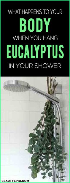 What Happens to Your Body When You Hang Eucalyptus in Your Shower - Beauty Epic Barn Wood Bathroom, Bathroom Niche, Rustic Bathroom Vanities, Bathroom Plants, Small Bathroom, Master Bathroom, Shower Plant, Eucalyptus Shower, Rustic Toilets