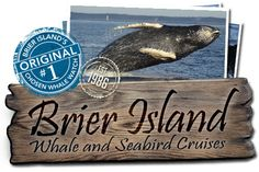 Brier Island Whale Watch | Whale Watching tours in Brier Island, Nova Scotia - best whale watching