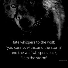 Fate whispers to the wolf; 'you cannot withstand the storm' and the wolf whispers back, - iFunny :) Great Quotes, Quotes To Live By, Me Quotes, Motivational Quotes, Inspirational Quotes, Wolf Spirit, Spirit Animal, She Wolf, Inspire Me