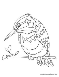 Colouring Pages of River Kingfisher free BEAUTIFUL COLOURING