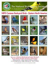 nbfs - common backyard birds eastern version