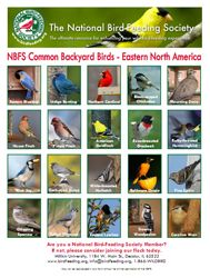 nbfs - common backyard birds eastern version