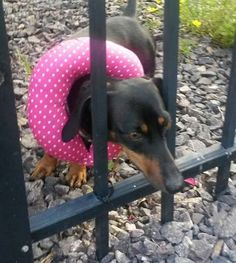 puppy bumpers - keep dogs from getting through fence and balcony
