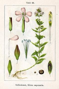 Plantas para fabricar jabones ecológicos -  Plants for  make eco soap