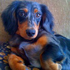 My dachshund Rico!