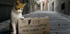 hogy nem csak a kutyákon hanem a macskákon is segítsünk Memes, Adventure, Social Network, Community, Party, Gatos, Pets, Dogs, Cat Breeds