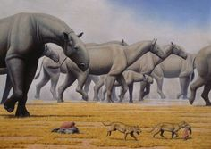Paraceratherium by Mauricio Antón 'The largest land animal alive today is the mighty African elephant, however even the largest adult bull elephants were dwarfed by the largest land mammal ever to exist.' ferrebeekeeper
