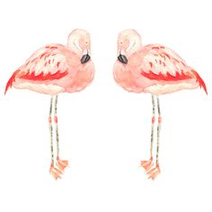 Two Flamingo Giclee Prints by wrensroost on Etsy, $50.00
