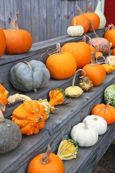 pumpkin-patch-fall-a