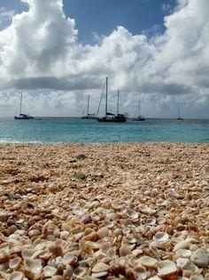 Shell Beach, Gustavia. SBI, FWI 2012 Holly Spalding©