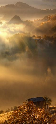 Bulgaria! | misty sunrise, Rodopi Mountain, Bulgaria by Albena Markova on 500px