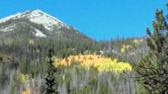 Golden Aspen leaves in Rocky Mountain National Park