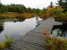 Six Mile Lake Park Muskoka Ontario Lake Park, Travel And Tourism, Outdoor Travel, Garden Bridge, The Great Outdoors, Ontario, Hiking, Canada, Camping