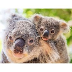 Just too darn cute for words #thisisqueensland by @sabbiak