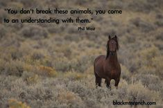 Marijke de Jong has made a couple of really nice horse-quotes-pictures, here's one of them. Description from tumblr.com. I searched for this on bing.com/images