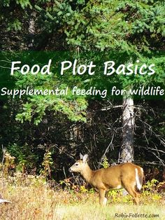 """Food plot basics and why we have them on our land. Our """"big"""" plot is small and something most any land owner with a rototiller can do. #foodplot #wildlife"""