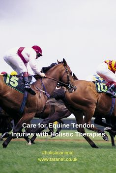 Equine tendon injuries can be bad news for horses and those who care for them, but a range of holistic therapies can be used to try and help - read more at www.taranet.co.uk and in our blog