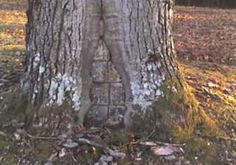 At the entrance to the Hampton Springs Cemetery in Carthage, Arkansas, there is a tree. Now, there are lots of trees, in this cemetery and in many others - almost every other, probably. But this tree is special. This tree has a gap in the base of its trunk that has been bricked up. The bricks, according to local legend, are hiding a corpse inside of the trunk.    It's just legend, an old wives' tale, but it's a captivating one that has kept many interested for many years.    The real…