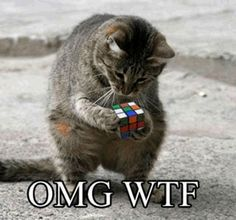 Cat and Rubik's Cube, not a good combination