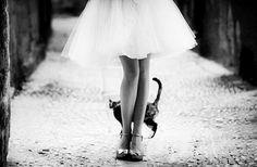 Gatos em casamentos