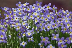 Image result for smoky mountains wildflowers