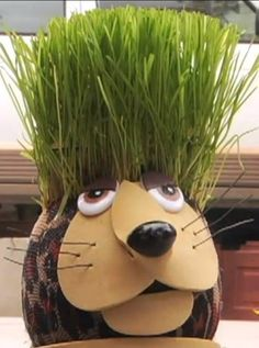 Learn how to make a grass head (grass doll) step by step for your kids or personal garden.