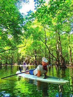 <沖縄・西表島の見所> マングローブに会いに水上散歩