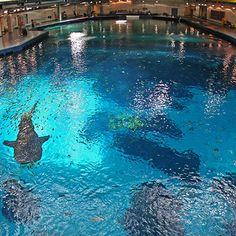 Directions & Parking – Georgia Aquarium swimming with whale sharks at the georgia aquarium in atlanta (next to cnn studio) Honeymoon Vacations, Dream Vacations, Vacation Spots, Vacation Destinations, Vacation Ideas, Hobbs New Mexico, Centennial Olympic Park, The Parking Spot Hobby, Swimming With Whale Sharks
