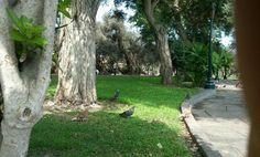 El olivar park, san isidro lima peru