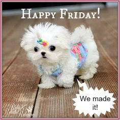 Happy Friday We Made It friday happy friday tgif good morning friday quotes good morning quotes friday quote good morning friday funny friday quotes quotes about friday cute friday quotes Good Morning Friday, Friday Weekend, Good Morning Good Night, Good Morning Images, Good Morning Quotes, Friday Pics, Friday Yay, Friday Pictures, Morning Humor