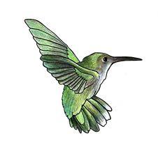 How to draw a hummingbird: Hummingbirds can be found all over the world. They beat their wings so fast that they produce a humming sound, hence their name. This tutorial will teach you how to easily draw one of these beautiful birds. Just Draw an oval for the head...