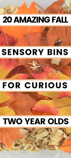 Fall Sensory Play Ideas For Toddlers! We put together over 20 easy fall sensory bin ideas for your toddlers and preschoolers. Fall Sensory Bins for 2 year-olds!! Fall Sensory Activities, Fall Activities For Toddlers, Fall Activities For Preschoolers, Activities For Kids. #toddlers #Fallactivities #toddleractivities