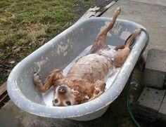Old clawfoot tub to bathe the dogs...When not in use, cover with an old barn or farmhouse door...for safety...and use as potting table when not in use as a tub...