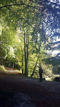 Wunderbare Farben der Buchenwälder Rügens im Herbst | Licht der Herbstsonne in den Büchenwäldern im Nationalpark Jasmund (c) Frank Koebsch (1)