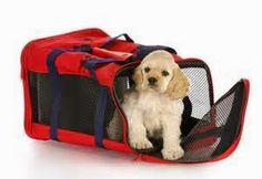 Things to do know when it comes to traveling on a plane with a dog.