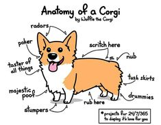 My art corgi pembroke welsh corgi Waffle the Corgi corgi addict stumpers anatomy of a corgi Corgi Meme, Corgi Dog, Corgi Facts, Dog Memes, Corgi Doodle, Doodle Doodle, Dog Drawing Simple, Drawing Ideas, Corgi Drawing